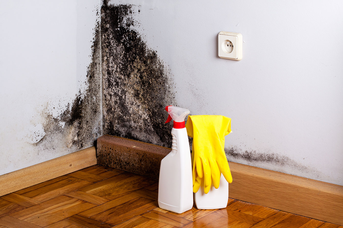 How do you clean mould off walls?